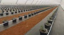 Water Ways Announces the Completion and Delivery of its Previously Announced Blueberries Irrigation Project in China Ordered by Driscoll's Subsidiary