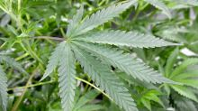 Harry Boxer: Two marijuana stocks are among charts worth watching