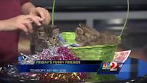 Meet Puff and Yummy, Friday's furry friends