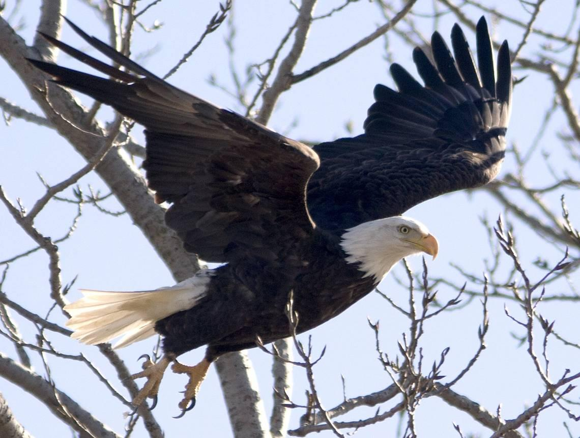 Eagle rips propeller off mapping drone, sends it plunging into Lake Michigan, agency says
