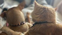 Ungewöhnliche Tierfreundschaft: Hund und Katze lieben sich heiß und innig
