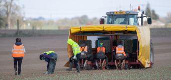 Farms demand migrant labour scheme