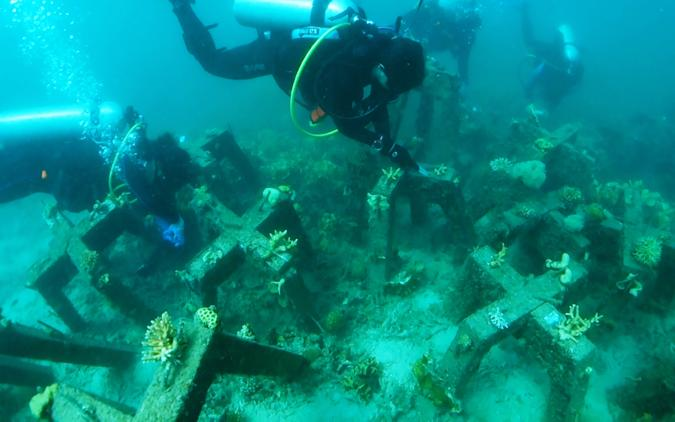 Divers install CORaiL's concrete structures and cameras.