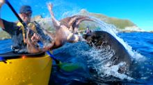 Extraordinary moment seal throws live octopus at kayaker
