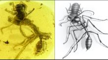 Fossil of fearsome 'hell ant' that used tusk-like jaws to hunt its victims discovered in amber
