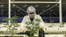 Aurora Sees More Legal Pot Products in a 'Matter of Months'
