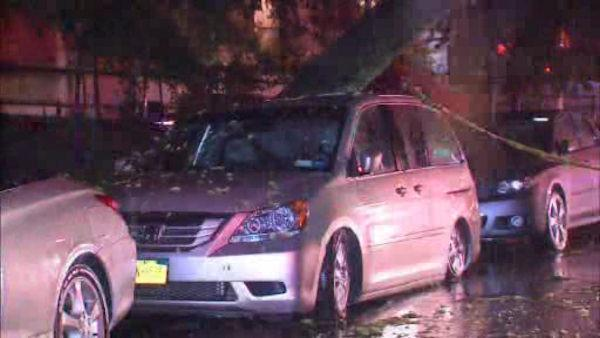 Tree crashes into minivan