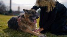 Joe Bidens Schäferhund Champ ist tot