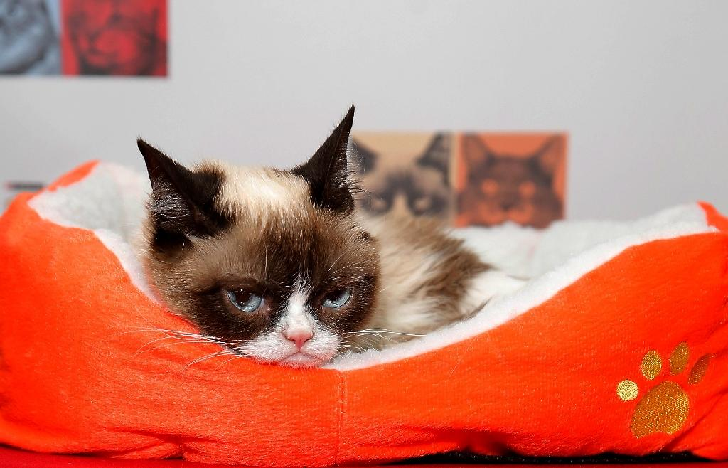 Grumpy Cat, whose pre-celebrity name was Tardar Sauce, became an internet sensation, her deep scowlearning her 1.5 million Twitter followers and 8.3 million Facebook fans (AFP Photo/Jemal Countess)