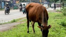 Sri Lanka to ban cattle slaughter