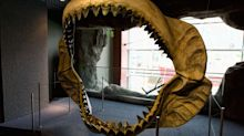 Exploding Stars Might Have Brought an End to the Prehistoric Megalodon