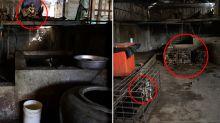 Dog slaughterhouse shut down after one million deaths