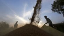 Exclusive: New zinc-fortified wheat set for global expansion to combat malnutrition