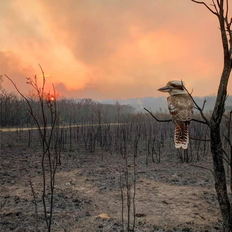 Pregnant volunteer firefighter helping fight Australian bushfires