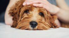 Perros terapéuticos: ¿estás a favor o en contra?