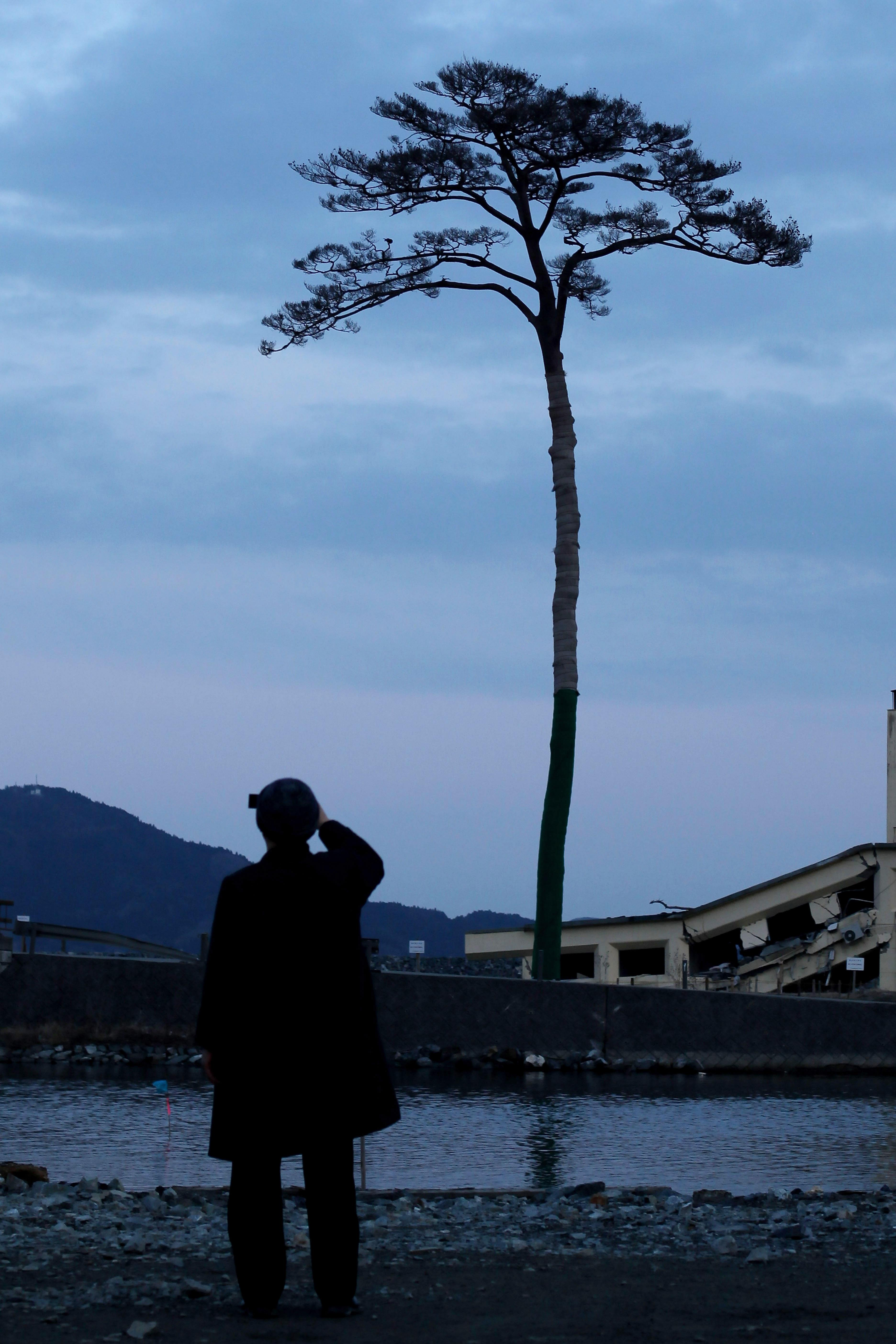 'Miracle tree' removed from tsunami-ravaged city