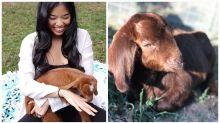 Baby goat meditation was the weirdest wellness trend of 2018