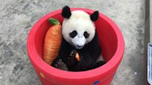 Xi's Carrot Could Be a Market Catalyst