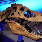 Researchers estimate 2.5 billion Tyrannosaurus rex inhabited the Earth