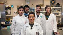 Mexicana descobre terapia capaz de eliminar vírus HPV