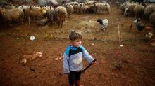 Syrians displaced by Idlib assault take shelter near Turkey