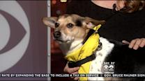 PAWS Pet Of The Week: Buddy