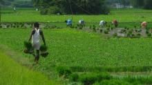 Madhya Pradesh farmer gets Rs 13 as loan waiver instead of Rs 24,000 promised to him