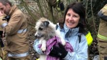 Scottish Firefighters Free Jack Russell From Fox Den