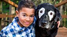 Menino com vitiligo se torna amigo de cachorro com a mesma condição