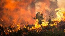 加州史上最大野火獲控制 5點了解這場「湯瑪斯野火」