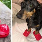 You Can Get Your Dog a Pair of Mini Crocs to Take the Cuteness Up a Few Levels