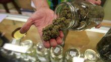 Federal prosecutors investigate California marijuana companies in wide-ranging probe