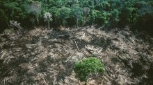 Are We Overestimating How Much Trees Will Help Fight Climate Change?