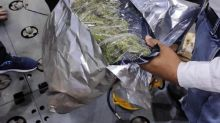 One held, 500 gms ganja seized at Delhi airport