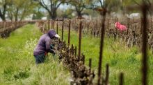 Farmworkers key to keeping US fed are wary of virus's spread