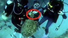 不能拍打也不能餵食海龜 2潛水客GG