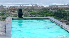 Das passiert, wenn Paviane einen Swimmingpool finden