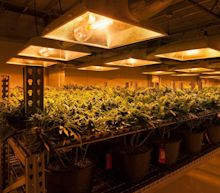 Cannabis Industry Introduction