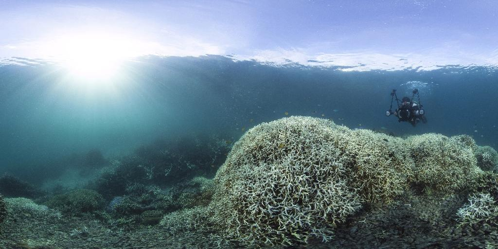 Bleaching is a phenomenon that turns corals white or fades their colours as they expel tiny photosynthetic algae, threatening a valuable source of biodiversity, tourism and fishing. (AFP Photo/STR)