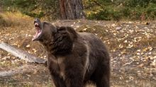 Montana man dies following attack by grizzly bear