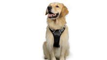 Más de 77.000 usuarios aseguran que este arnés es perfecto para ti y para tu perro