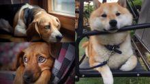 5個狗狗寂寞的表現
