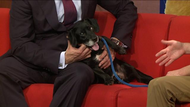 Pet Of The Week: Meet 11-Year-Old Jake