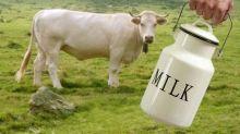 78 Persen Konsumsi Susu Masyarakat Indonesia Masih Impor