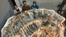 Watch experts uncover Zuul, the new dinosaur going on display at the ROM in December