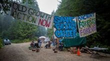 First Nation's council and chief ask '3rd-party' activists to stand down in B.C. logging dispute