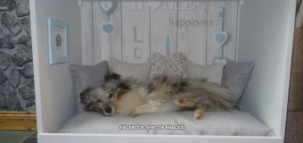 Woman turns dressers into cozy dog beds