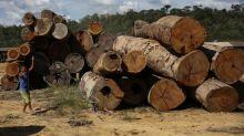 PF faz operação contra desmatamento ilegal no Pará