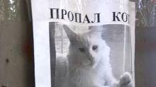 Entlaufene Katze: Suchplakat sorgt für Gänsehaut im Netz