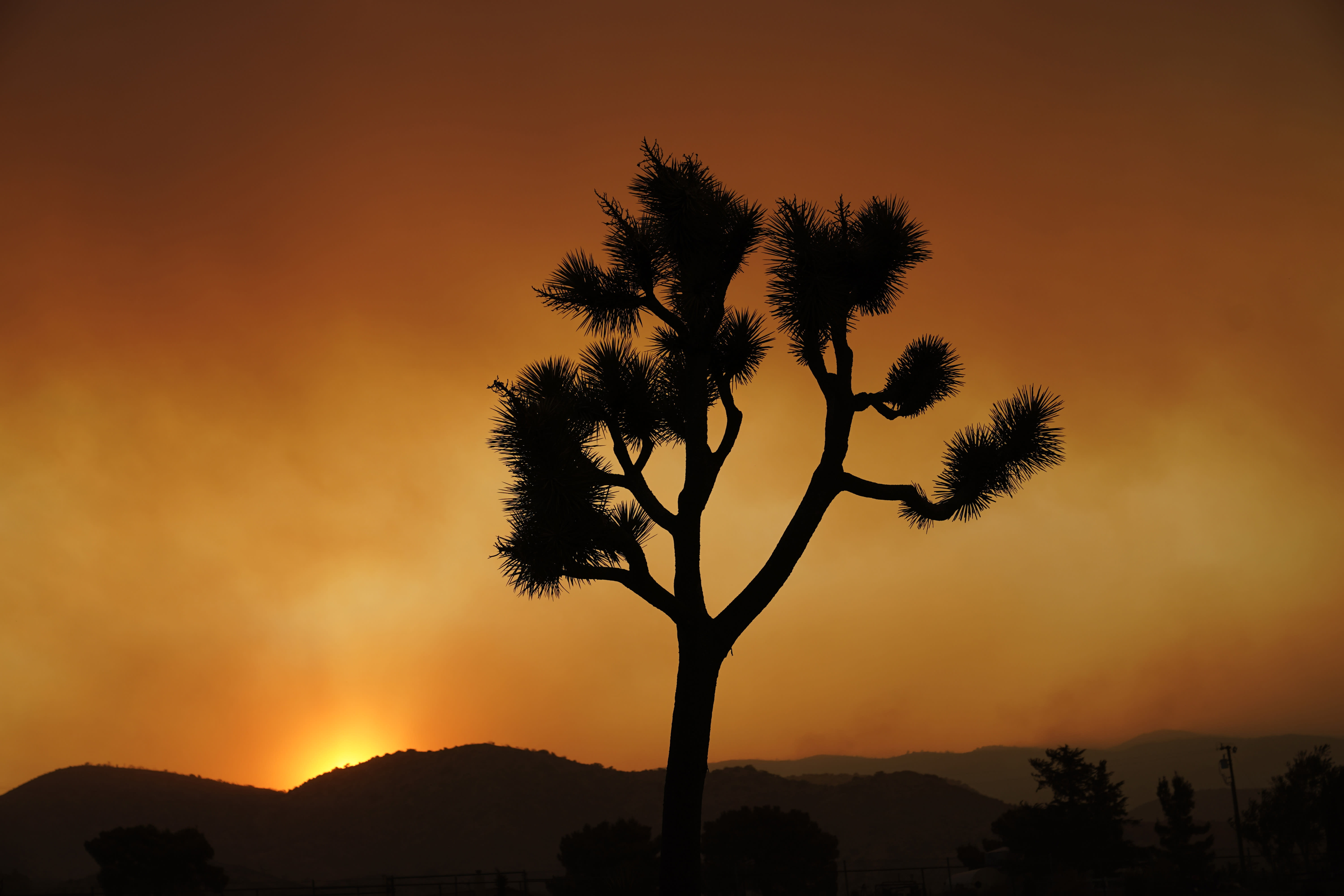 A Joshua tree is silhouetted in front of the Bobcat Fire at sunset Saturday, Sept. 19, 2020, in Juniper Hills, Calif. (AP Photo/Marcio Jose Sanchez)